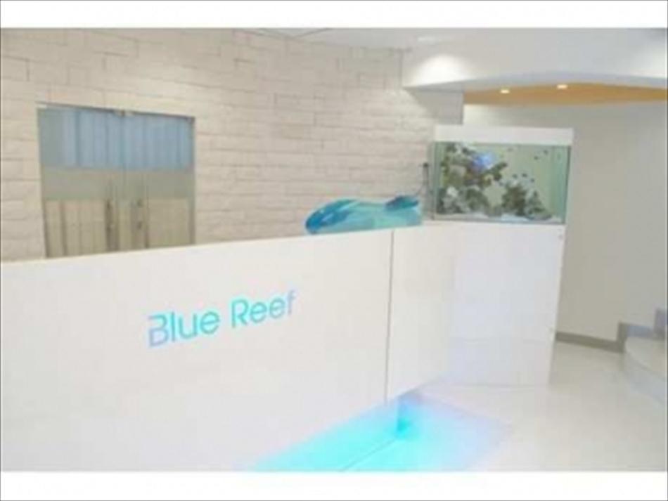 Blue Reef(ブルーリーフ)